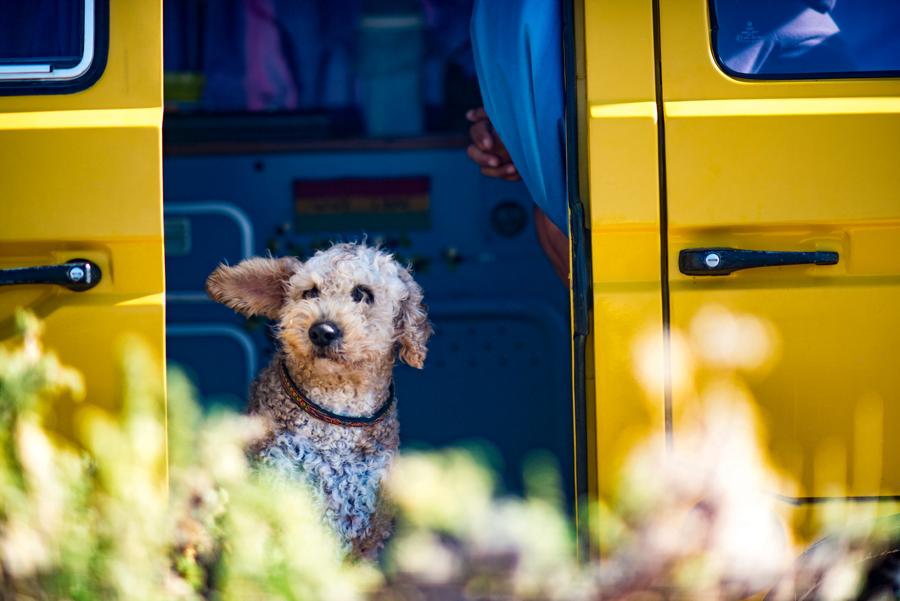 voyager avec son chien ou son chat